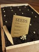 Seeds on ground  in wooden basket — Stock Photo