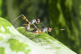 A macro shot of fly, insects mating — Stock Photo