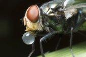 Vliegen veroorzaken ziekten — Stockfoto