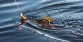 Fishing for Pickerel — Stock Photo