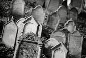 Jewish cemetry — Stock Photo
