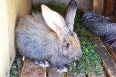 Grey rabbit — Stock Photo