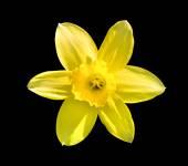 Yellow flower in the grass macro — Stock Photo