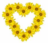 Heart of yellow flowers of decorative sunflowers Helinthus isolated on white — Stock Photo