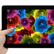 Tablet PC in hand with mix collage of rose flowers rainbow background on screen isolated on white — Stock Photo #78408202