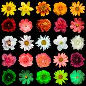 Mix collage of yellow, red, white, rose, green flowers: day lili — Stock Photo