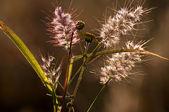 Wild flowers — Fotografia Stock