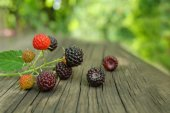 Blackberries on a branch with blurred background and bokeh — Stock Photo