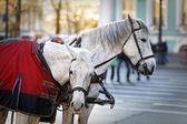 Carro cerca de la ermita de San Petersburgo — Foto de Stock