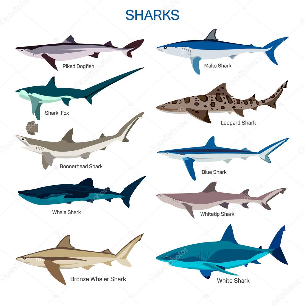 a look at the different classification of dogfish