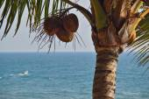 Walnut, coconut  ,beach and palm trees, , beach, — Stock Photo
