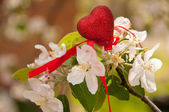 White apple spring blossom and red heart — Stock Photo