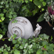 Decorative snail in the garden — Stock Photo #74274511