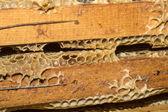 Plaster miodu, wosku pszczelego i miód — Zdjęcie stockowe