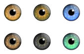 Sammlungen-Augen — Stockvektor