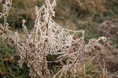 Spider silk — Stock Photo