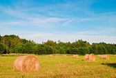Haystacks in a field — Stock Photo