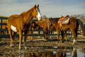 Horses in stable — Stock Photo
