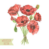 Red poppies and buds — Stock Vector