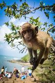 猴子岛 — 图库照片
