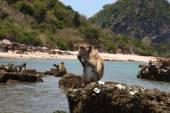 Monkey's lunch — Stock Photo