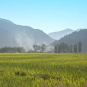 Green rice planting and mountains — Stock Photo