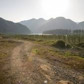 Grassland with cedar forest — Stockfoto