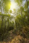 緑の木々 と竹林 — ストック写真