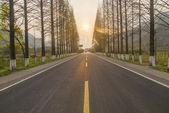 лесная дорога шоссе как фон — Стоковое фото