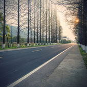 Forest highway Road as background — Stock Photo