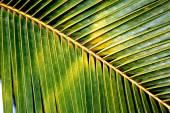 Green coconut leaf pattern — Stock Photo