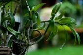 Tropische vegetatie — Stockfoto