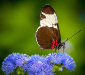 Butterfly on green background and the grass — Stock Photo