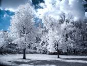 Infrared Landscape with White trees and Water — Stock Photo