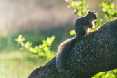 Squirrel sitting on tree — Stock Photo