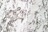Whitewashed trunk texture background pattern — Stock Photo