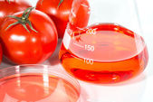 Vegetable test,  Genetic Modification,  tomato — Stock Photo
