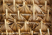 Thatch in Latin America — Stock Photo
