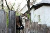 Katt på planket — Stockfoto