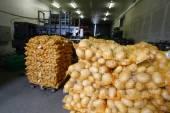 Bagged potatoes — 图库照片