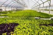 Greenhouse farm — Stock Photo