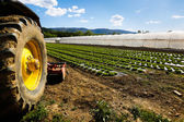 Tractor wheel and lettuce farm — Stock Photo