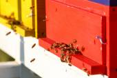 Domesticated honeybees in flight, returning to their beehive — Stock Photo