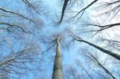 Trees No 1 — Stock Photo