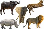 African Big Five — Stock Photo