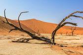 Deadvlei Namibia — Stock Photo