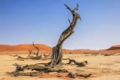 Namib Naukluft — Stock Photo