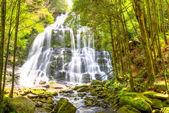 Νέλσον Falls Τασμανία — Φωτογραφία Αρχείου