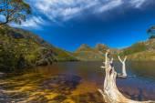 Cradle Mountain Tasmania — Stock Photo