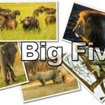 ������, ������: African Big Five